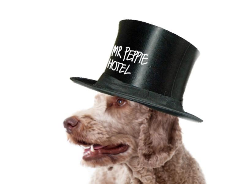 Mr Peppie Concierge